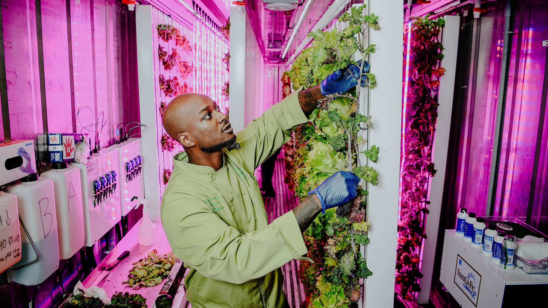 Chef Cris cares for some kale in Mean Green Acres hydroponic garden